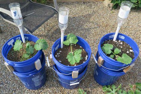 bucket gardening reddit container gardening ideas