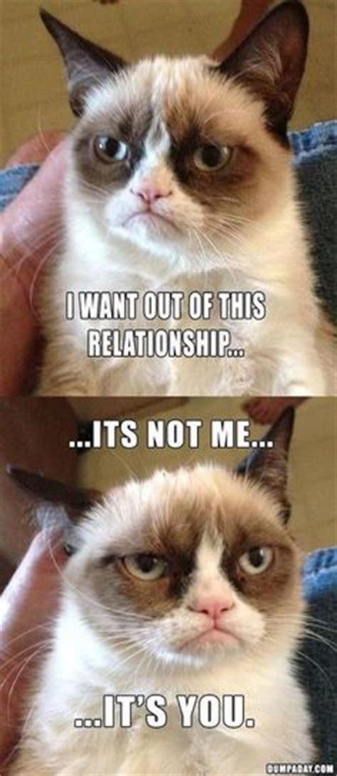Grumpy Cat Meme Valentines Day - 1000 images about grumpy cat on pinterest grumpy cat
