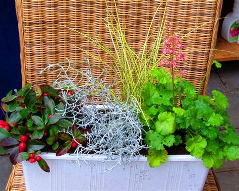 garten versand katalog pflanzen versand kataloge pflanzen garten katalog
