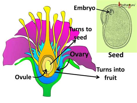 plant reproduction diagram science sexual reproduction in plants pollination