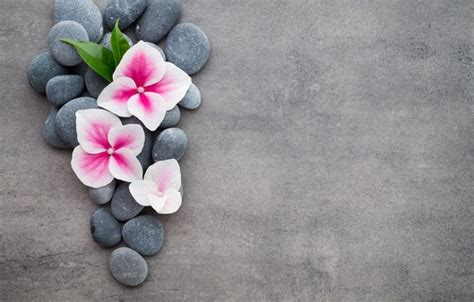 fiori day spa wallpaper flowers stones flower orchid spa stones