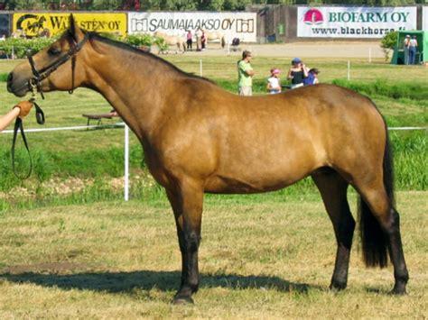 connemara pony coloring pages connemara pony wikipedia