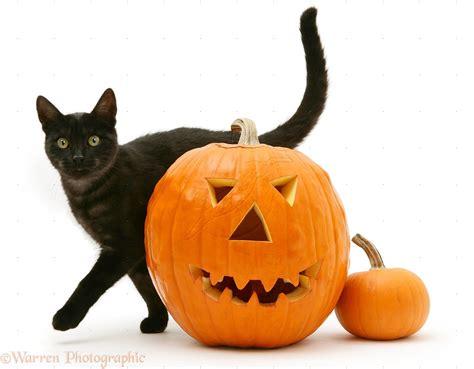 cat and pumpkin black cat wallpaper wallpapersafari