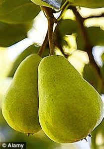 when do pear trees produce fruit ask monty don how can i encourage my pear tree to produce