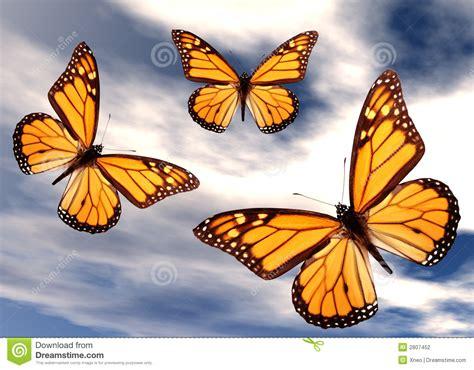 Imagenes De Mariposas En Vuelo   mariposas en vuelo stock de ilustraci 243 n imagen de