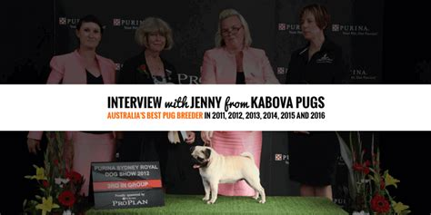 kabova pugs start run and grow a kennel