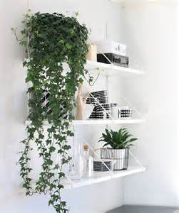 Indoor Plant Decoration by How To Decorate Your Interior With Green Indoor Plants And