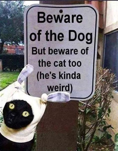 beware of the beware of the and cat pictures photos and images for