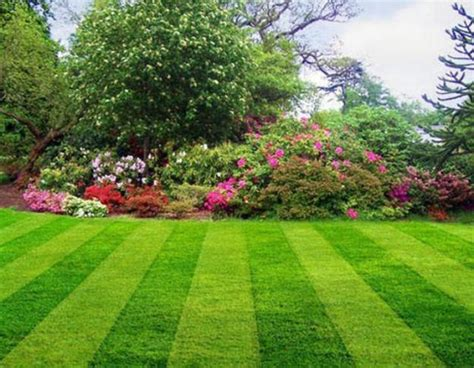green lawns and yard landscaping ideas in