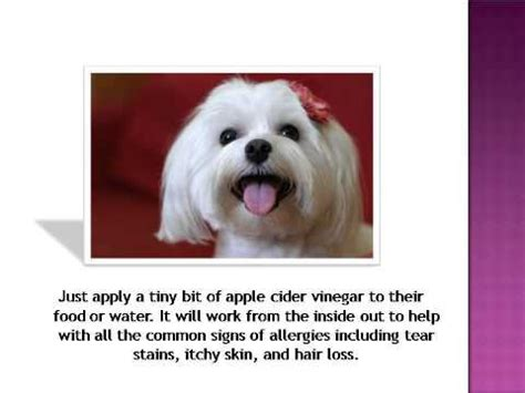 after deworming a puppy what happens apple cider vinegar can heal your or cat doovi