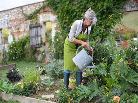 How To Maintain A Vegetable Garden Tips For Maintaining Kitchen Garden Boldsky