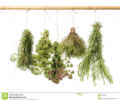 hanging herbs hanging herbs 28 images pretty hanging trellis herb 25 best ideas about hanging herb