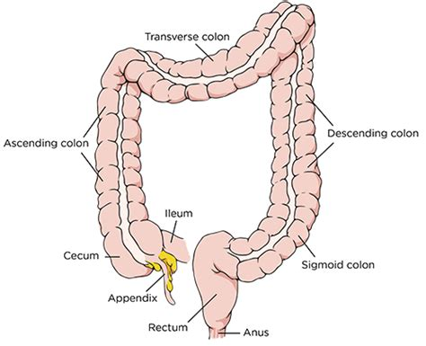 removal of colon section sigmoid colon removal colorectal surgery colon cancer