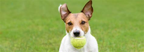 free puppy classes at petsmart tips for drop it petsmart