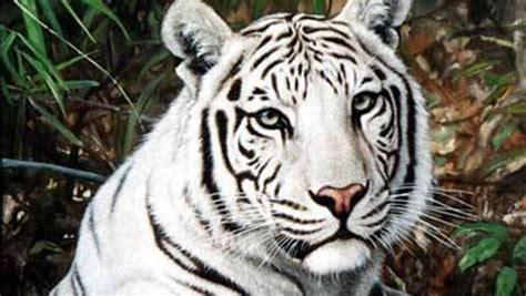 imagenes de animales hermosos del mundo 20 de los animales m 225 s hermosos del mundo
