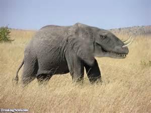 le elefant elephant dinosaur pictures freaking news