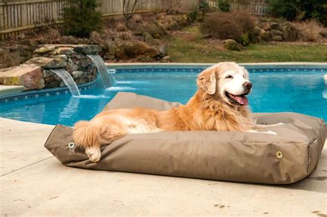 outdoor heat l for pets self dog beds beds outdoor dog bed xxl extra large