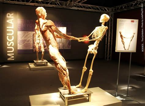 With The Bodies by Inside The Bodies The Exhibition You Ll Want To Stop