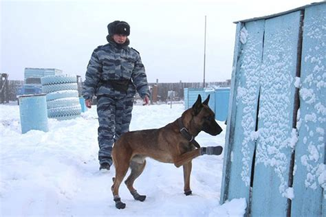 Burglars Two Cloned Dogs Start Work Guarding Prisoners At Forced