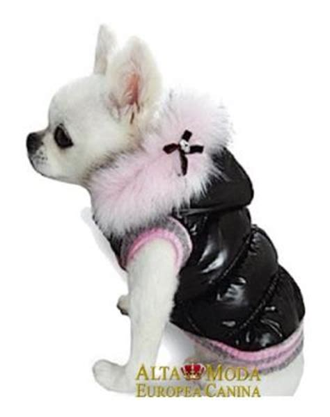 moda canina moda  perros