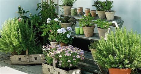 Balcony Herb Garden Ideas 7 Apartment Herb Garden Tips Apartment Gardening Balcony Garden Web