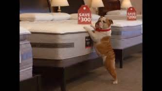 Mattress Discounters Sale by Mattress Discounters Tag Sale Tv Commercial 300