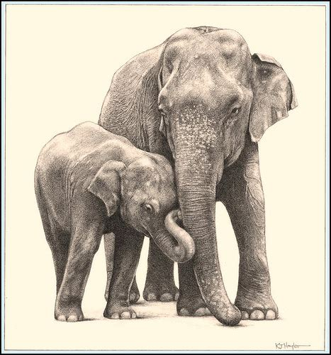 Drawing Elephant by Pencil Drawing How To Draw Elephant Pencil Drawing