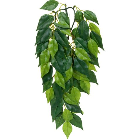 Dschungel Pflanzen by Exo Terra Silk Ficus Jungle Plant Petco