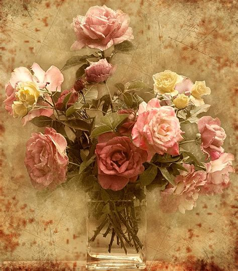 vintage roses beautiful flowers