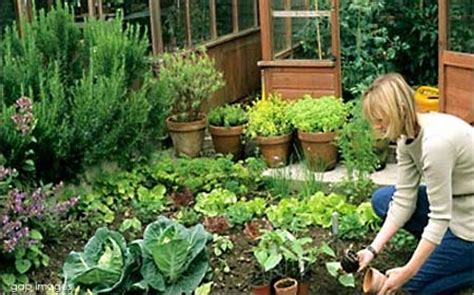 kitchen garden vegetables kitchen gardening vegetables and fruits to grow