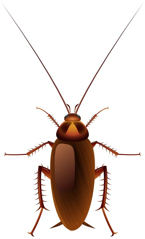 Unique Lamps cockroach png clip art best web clipart