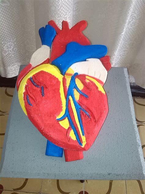 como hacer maquetas de corazon como hacer una maqueta del corazon imagenes de una
