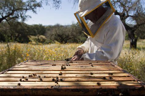 backyard beekeepers association beekeeping supplies necessary china beekeeping supplies products bee hive products beekeeping