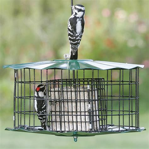 Suet Feeder Squirrel Proof duncraft baffled suet feeder