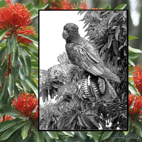 natural history painting 1906388490 red tailed black cockatoo and tree waratah watercolour natural history painting heidi willis