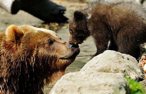 Animal World 5 beautiful animal world