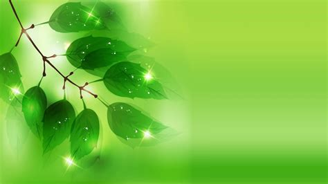 wallpaper green background green background 76 33558 wallpaper risewall