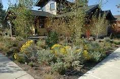 1000 images about plants for the front yard on pinterest high desert landscaping deserts and