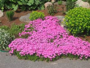 Pink Flower Garden Ten Pink Garden Plants Journal Garden Design Montreal Perennial Flower Gardens