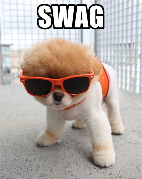 Dog With Glasses Meme - swag boo the dog sunglasses meme generator