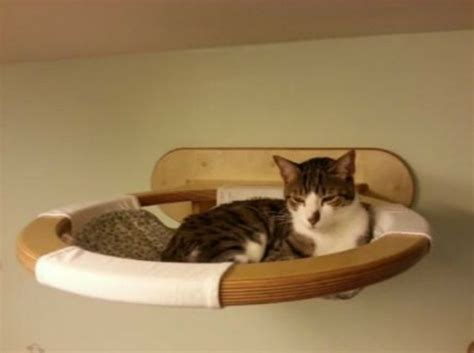 cat wall furniture per your cat with one cosy switch cat bed fresh
