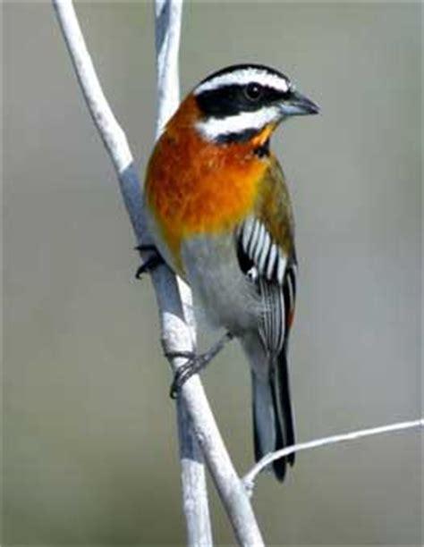 birdnet ltd