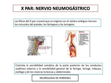 derecho del trabajador rincon del vago sistema respiratorio rincon del vago sistema respiratorio