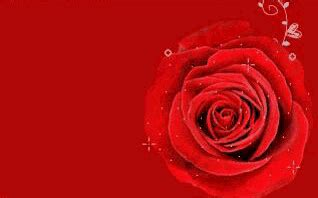 nokia 5233 love rose themes download animated red rose symbian s60 3rd edition 320x240