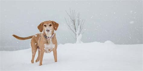 creative names for dogs 55 winter names creative name ideas for your pup