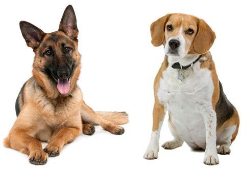wobblers in dogs names woofwobbler in dogs