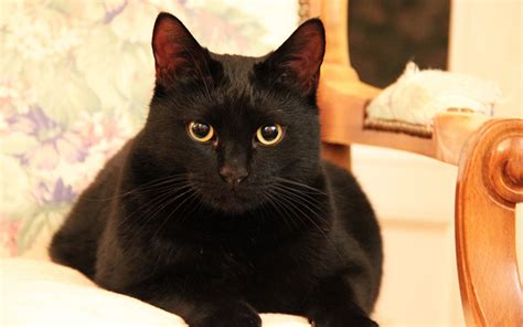 names for a black names for black cats
