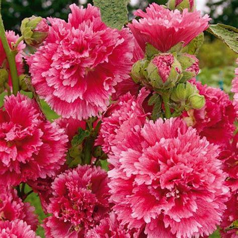winterharte blumen die lange blühen hitparade der besonders langbl 252 henden stauden gartenblog
