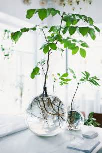 rooting plants in water in glass vases home decorating diy
