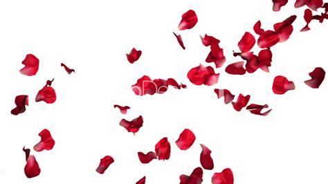 wallpaper flower petal rose petals wallpaper 1920x1080 7548